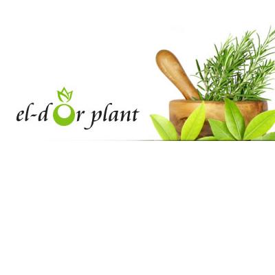 El-Dor Plant