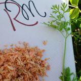 Conservare morcovi (raw)