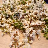 Sampanie din flori de SALCAM